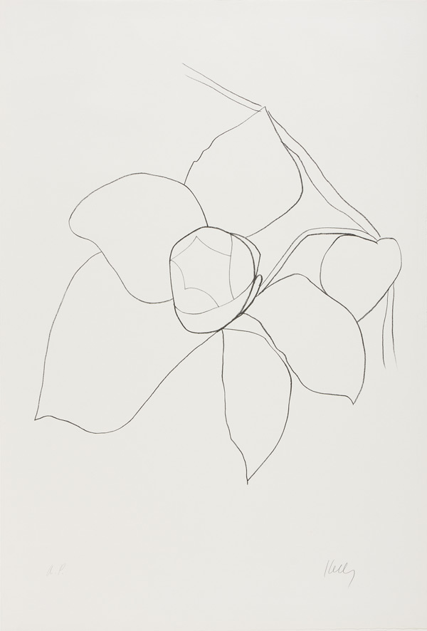 "Kelly's lithograph ""Camellia II"" from 1964–65"