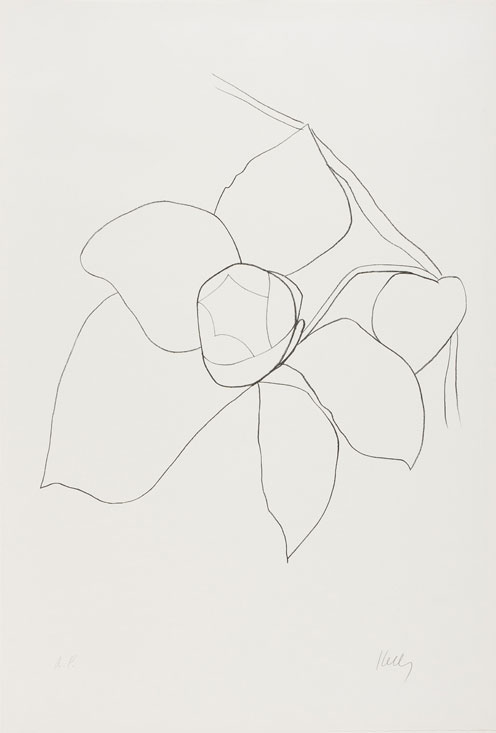 Ellsworth Kelly: Nature Abstracted